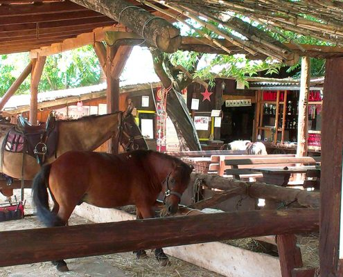 horse petting croatia istria