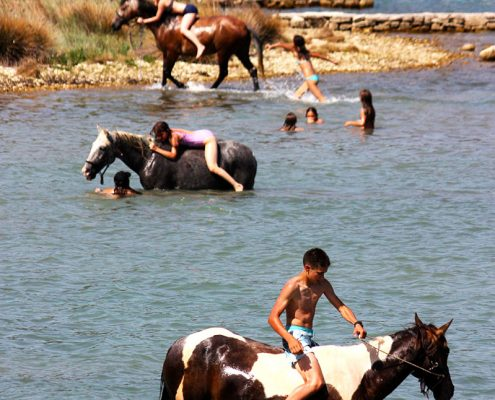 croatia holiday horses